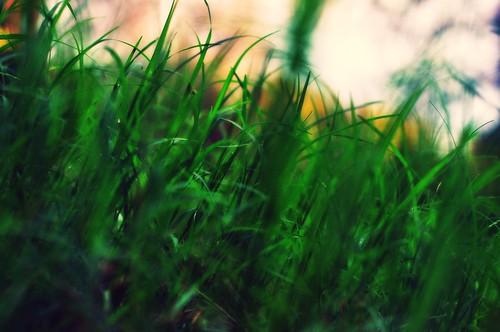 Grass:  September 23, 2009