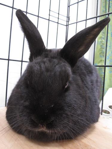 cole bunny