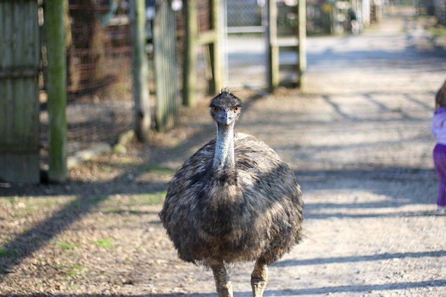 scary emu