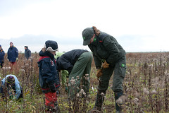 Volunteers at work to remove young trees to preserve nature (Natuurwerkdag 2009) (LEXsample) Tags: autumn boy red brown plant tree male green netherlands amsterdam female observation outdoors island nationalpark uniform europe child looking outdoor watching group working young overcast listening jacket cap naturereserve maintenance vegetation wife glove recreation tug nl volunteer root wellies pulling rubberboots active noordholland observing ijmeer staatsbosbeheer unroot natura2000 natuurwerkdag naturemanagement lexsample rootout disroot hoeckelingsdam kinseldam secondairysuccession
