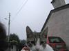 ciao gatto sei sulla mia spalla