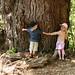 Lil' Tree Hugggers