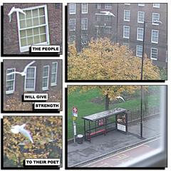 Bus Stop 20 (ruSSeLL hiGGs) Tags: street windows tree bird outdoors wings dove seagull busstop comiclife poet fumetti hackney gdansk czeslawmilosz