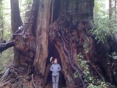 Emily and Giant Cedar