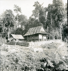 Lape Forestry Station