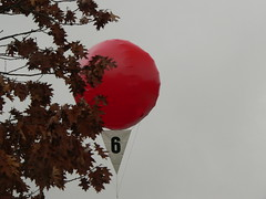 DARPA Red Balloon Challenge