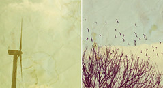 Just Like The Olden Days ({peace&love}) Tags: old blue trees sky texture windmill birds yellow vintage flying diptych flock retro sparrow nostalgic stains pinkparis1233