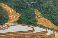 K8816.0613.Nậm Ty.Hoàng Su Phì.Hà Giang. (hoanglongphoto) Tags: asia asian vietnam northvietnam northeastvietnam landscape scenery vietnamlandscape vietnamscenery vietnamscene mountain flank terraces terracedfields transplantingseason sowingseason treehill mountainouslandscape terracedfieldsinvietnam canon canoneos1dsmarkiii outdoor đôngbắc hàgiang hoàngsuphì nậmty phongcảnh ruộngbậcthang đổnước mùacấy núi sườnnúi ruộngbậcthanghoàngsuphì canonef70200mmf28lisiiusmlens