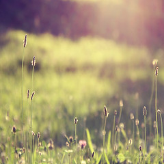 summer haze (Tanjica Perovic) Tags: light summer sunlight green nature field grass backlight square outdoors photography haze warm bokeh meadow warmth peaceful sunny growth squareformat simplicity getty environment dreamy serene summertime backlit minimalism sunrays pleasure atmospheric laziness pleasant freshness sunbeams gettyimages summerfeeling 500x500 summerlight summerafternoon alliswell summermood summerdream fotografija  summerbokeh summeratmosphere pleasantsummerafternoon  tanjicaperovicphotography availableforlicensingongettyimages idyllicsummerday hazyheatofsummer backlitgrassinthesummerafternoon