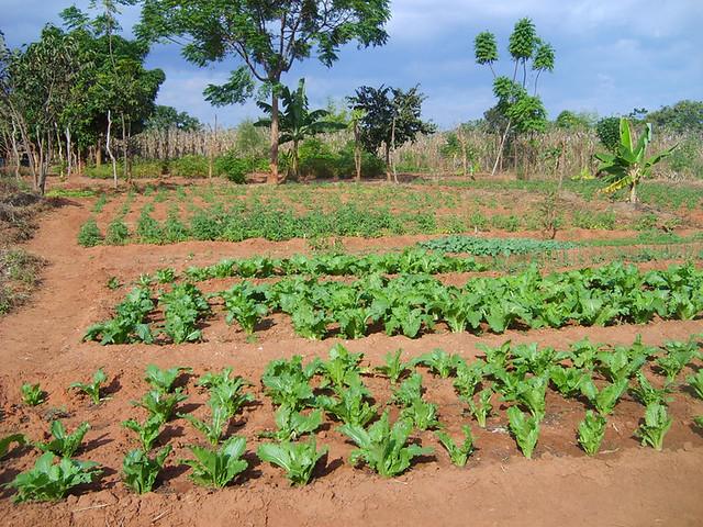 Veg. garden