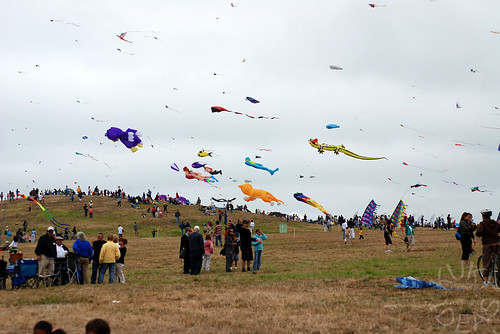 So many kites