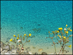 ...romantic view... (zio.paperino) Tags: travel flowers sea summer italy mer beach nature water geotagged lumix mar holidays europe italia mare playa natura panasonic explore frontpage calabria tropea vibo ziopaperino mygearandme mygearandmepremium mygearandmesilver mygearandmegold