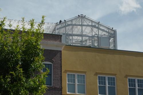 TheDailyCity.com | rooftop garden?