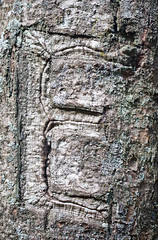 """E"" on tree (lsheirer) Tags: macro tree nature canon typography tennessee northcarolina carving bark e appalachiantrail greatsmokeymountains roanmountain"