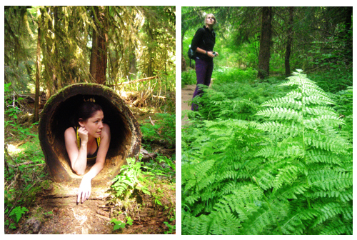 WA 8.4.09 Ferns Collage