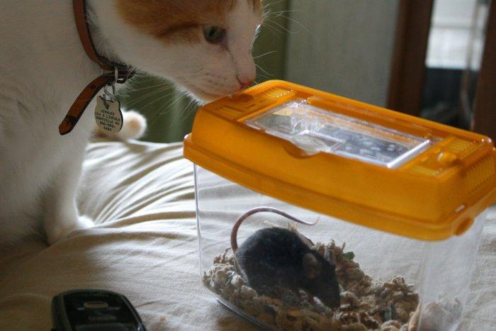 08-11-mousejingles