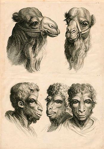 018-Le Système de Lebrun sur la Physionomie 1806