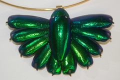 CD473 Jewel Beetle Necklace (listentoreason) Tags: usa color green art nature animal closeup museum america canon insect necklace newjersey unitedstates beetle favorites places jewlery animalia arthropoda invertebrate arthropod coleoptera tomsriver insecta pterygota buprestidae neoptera endopterygota ef28135mmf3556isusm score30 jewelbeetle polyphaga bugmuseum metallicwoodboringbeetle elateriformia insectropolis buprestoidea bugseum