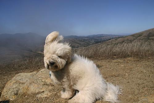 Hiker Pup