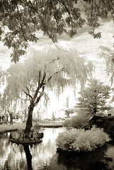 CHICAGO 9.20.09 (Mikey's state of Maine) Tags: trees chicago sunrise zoo parks urbannature infrared