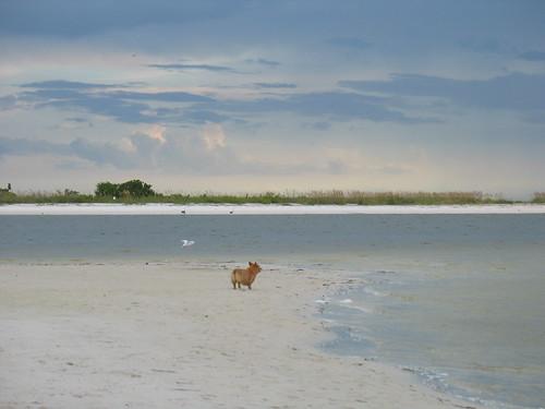 Sampson at Dog Beach