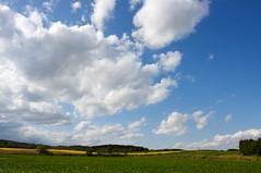 ひまわり畑の緩やかな曲線