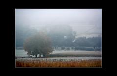 Gele et brume ! - Frost and mist ! (capitphil) Tags: mist fog frost belgium belgique brouillard brume wallonie gele