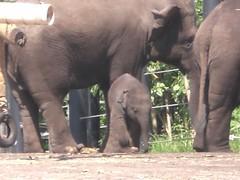 Taronga Zoo 023