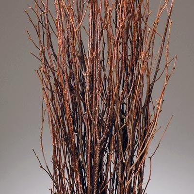 Birch-Branches_LRG