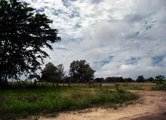 Turning point / Punto de inflexión (Claudio.Ar) Tags: trees sky santafe tree argentina clouds landscape skies path sony fields dsc pampa h9 claudioar claudiomufarrege