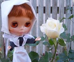 Oooooooh...a perfect Thanksgiving Rose!