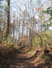 Nature Trail (Tower Gate, North Carolina, United States) Photo