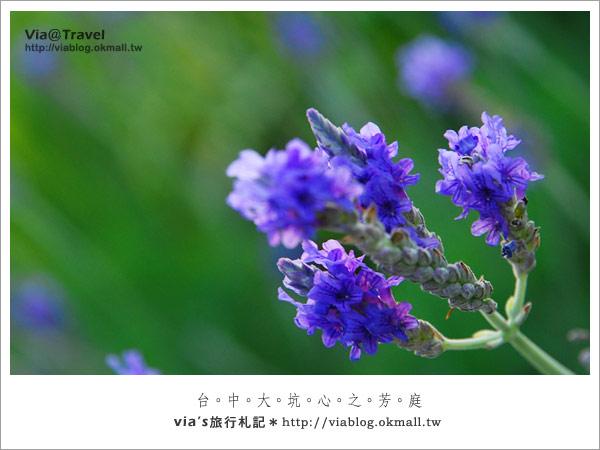 薰衣草森林-心之芳庭約會區46