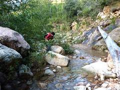 Canyon de Carciara par les ruisseaux de Mela/Carciara : les blocs du Mela