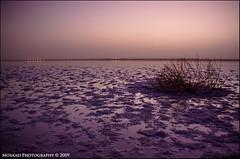 ما بعد الغروب في العوشزية -  The Dusk (~ MSD ~) Tags: sunset canon rebel dusk غروب 500d القصيم onaizah عنيزة unizah عنيزه العوشزيه العوشزية t1i unayzah onayzah