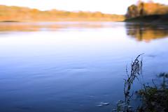 Yellow & Blue Silence, autumn river (czdistagon.com) Tags: cz contax distagon 3514 czcontaxdistagon3514 nature landscape dof autumn panorama czdistagon czdistagoncom aleksandrmatveev carlzzeiss zeiss river volga