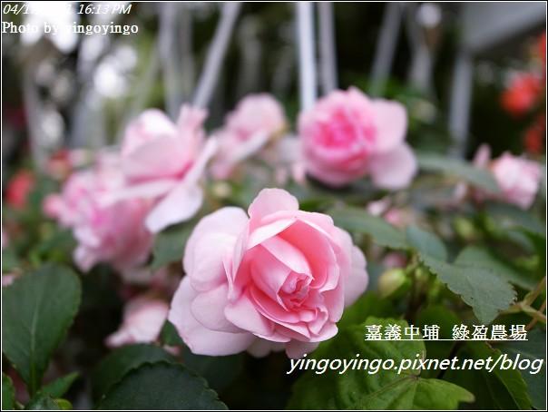 嘉義中埔_綠盈農場20110417_R0019059