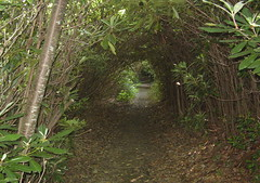 Rhododendron tunnel Photo