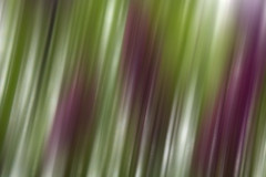purple plant (LucyJune...) Tags: longexposure flowers abstract green purple smudge