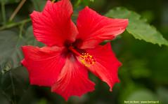 Flowers in bright colors (Bert de Boer) Tags: flowers bright colors bossen bertdeboer bloemen bertop flower flouwers