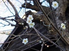 IMGP5302 (digitalbear) Tags: pentax q7 01 standard prime 85mm f19 nakano tokyo japan fujiya camera