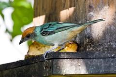 (rea Silvestre) Tags: fauna medellin areametropolitana reasprotegidas