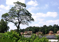 Boathouse Row, with tree (moocatmoocat) Tags: houses house philadelphia river boat row moo boathouse schuylkill