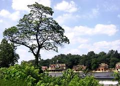 Boathouse Row, with tree (moocatmoocat) Tags: houses house philadelphia river boat row moo boathouse schuylkill