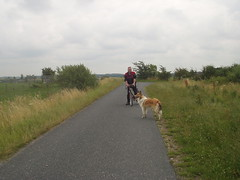 Radtour4 (manopet) Tags: dog collie hund mano meldorf torja