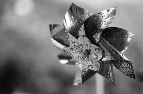 Rainy pinwheel