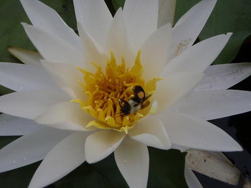 Got pollen?