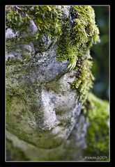 Statue (JKmedia) Tags: uk sculpture macro art statue stone gardens closeup moss cornwall estate display head south carving bust weathered ornamental contemplate soulful feature relic contemplation trevarno italiangarden 15challengeswinner thechallengegame challengegamewinner thepinnaclehof tphofweek58