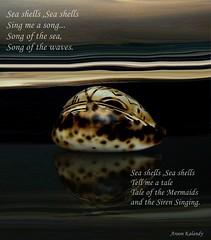 On the shore.... (aroon_kalandy) Tags: light sea beach beauty creativity sand waves artistic awesome shell greatshot impressions seashore naturelovers calicut beautifulshot anawesomeshot malayalikkoottam thesuperbmasterpiece sonyh50 aroonkalandy