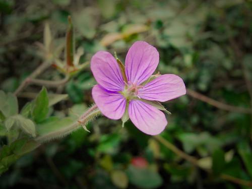 Flower-064